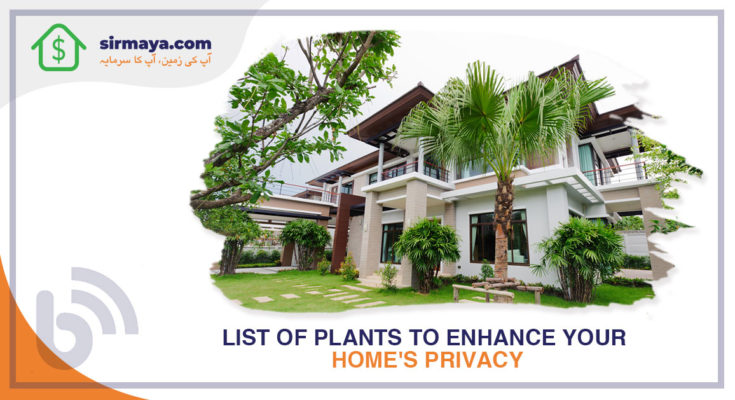 List of Plants to Enhance Your Home's Privacy and Curb Appeal