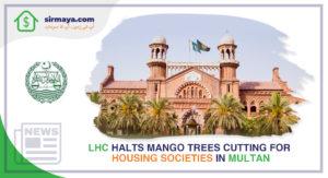 LHC Halts Mango Trees Cutting for Housing Societies in Multan