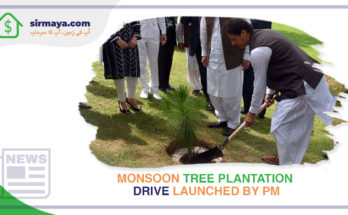Monsoon Tree Plantation